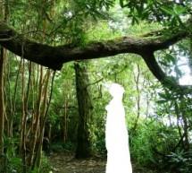 Warum das Dschungelcamp so fasziniert