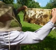 Bienensterben: Maja, erzähle uns von dir!