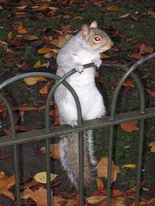 01squirrel